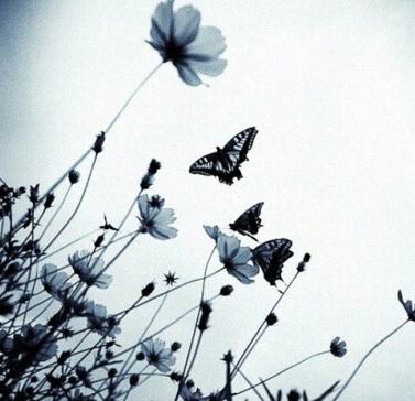 蝴蝶很美,终究飞不过沧海